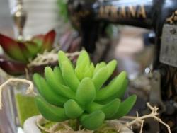 Pflanzen_3